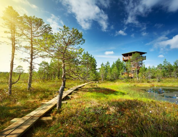 Viru bogs at Lahemaa national park in summer. Wooden path for hiking in sunny day